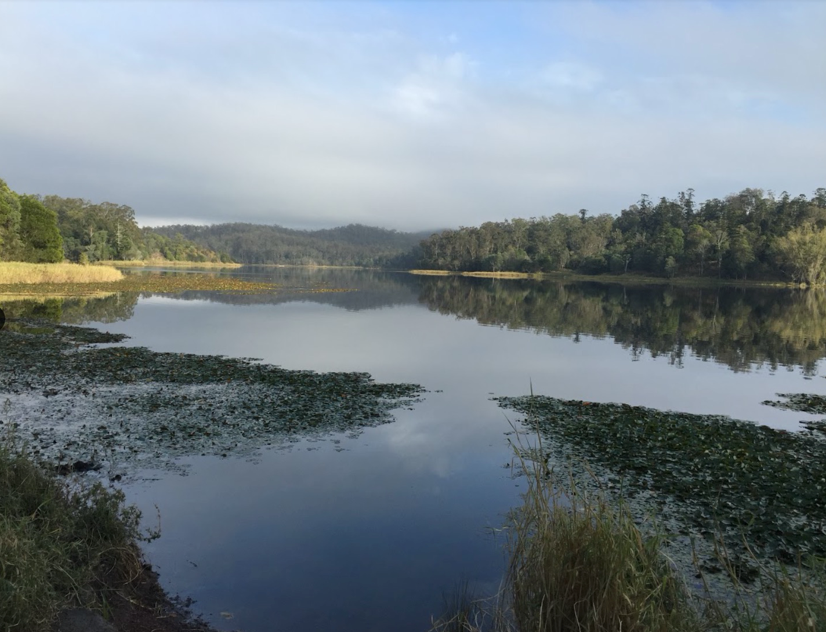 Contemplative Walk – Enoggera Reservoir – The Gap QLD