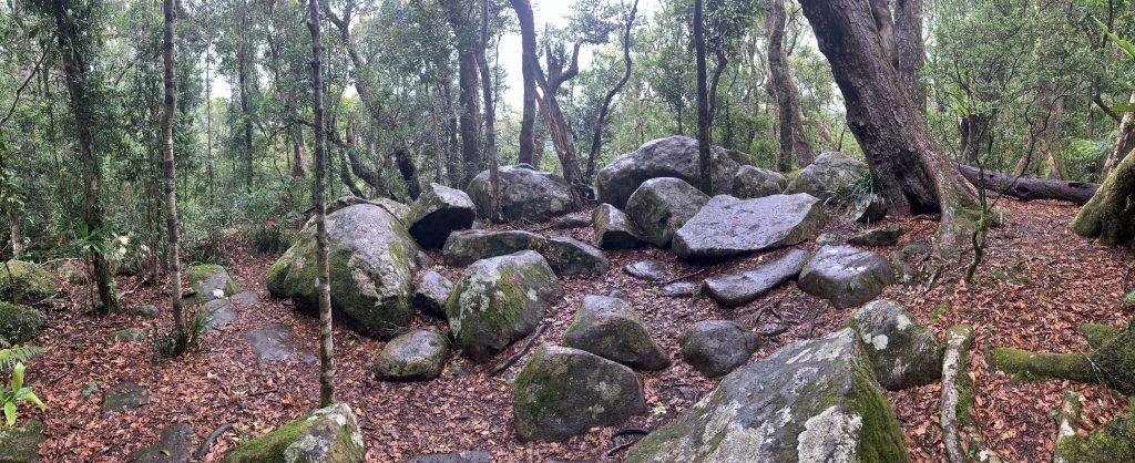 Contemplative Walk – Binna Burra, QLD