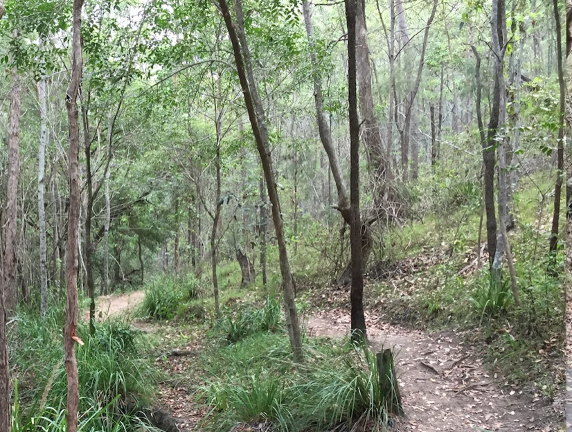 Contemplative Walk – Mt Coot-tha QLD